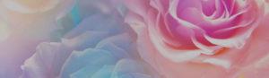 gm_slider_peony_flower_bg
